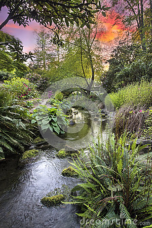Free Stream At Crystal Springs Rhododendron Garden Sunset Stock Photography - 30773382
