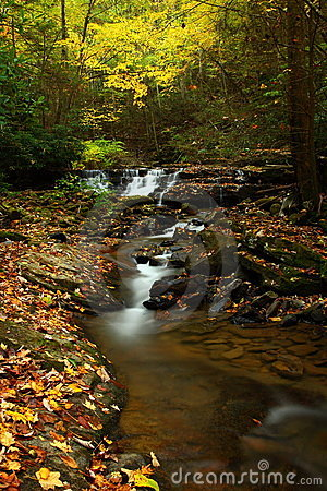 Stream in Autumnal forest