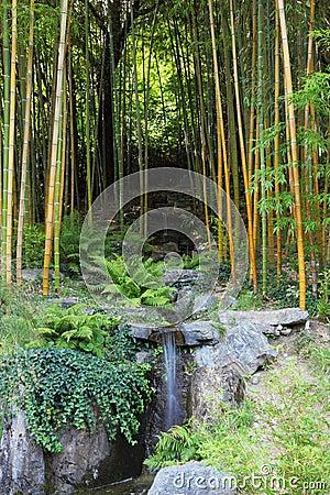 A stream in a bamboo grove