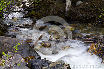 Stream in Banff National Park