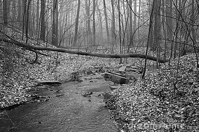 Stream in Black and White