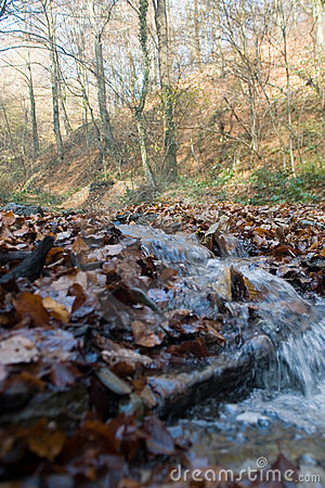 Stream in countryside