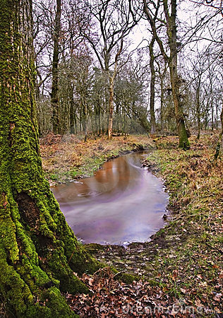 Stream flowing through Winter forest