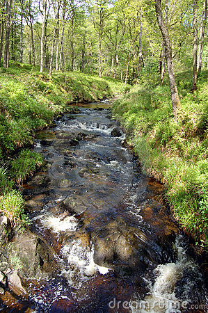 Stream in Forest Park wider