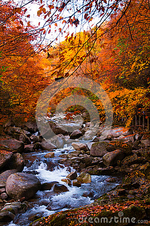 Free Stream In Golden Fall Forest Royalty Free Stock Photography - 46585277