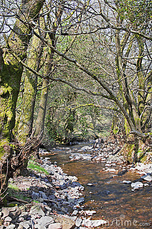 Free Stream In The Woods Royalty Free Stock Image - 24008136