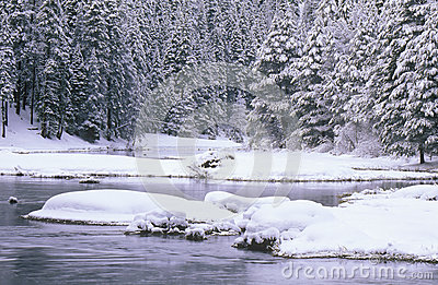 Stream and Pine Trees in Snow