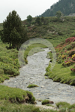 Stream in Pyrenees