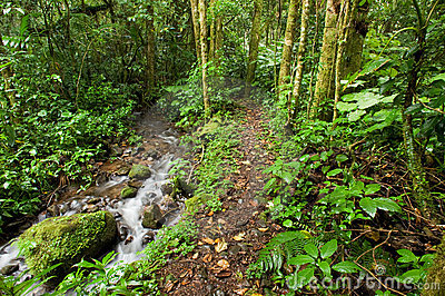 Stream through rain forest