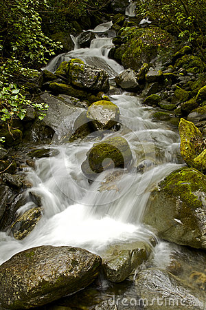 Stream In The Rainforest Royalty Free Stock Image - Image: 28204656
