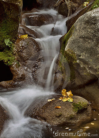 Stream and yellow leaf