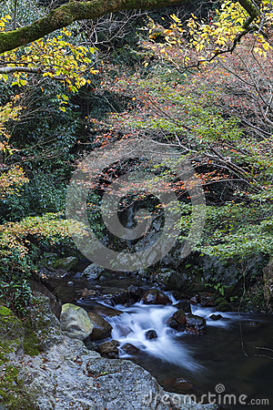 Free Streamlet With Overflowing Water From Minoh (Mino-o) Waterfall Stock Photography - 74041302