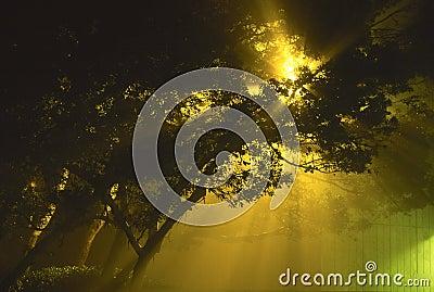 Street light radiating on a foggy night