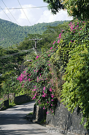 Street scene bequia flowers and wall