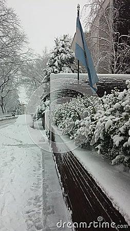 Street snow fall