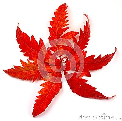Strength of autumn