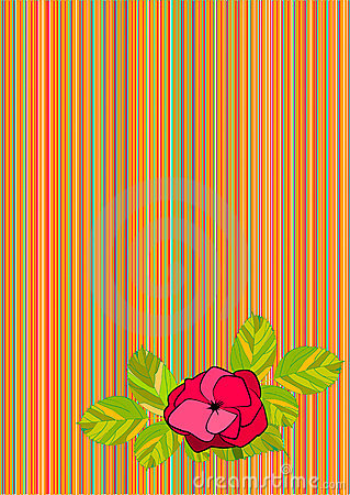 Striped background with rose