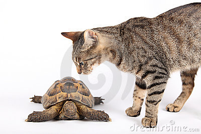 Striped cat and land turtle