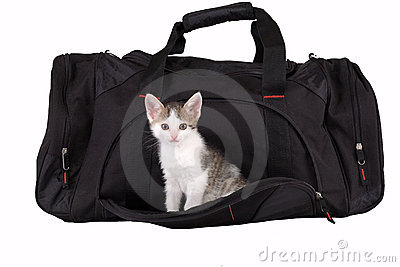 Striped kitten in the bag