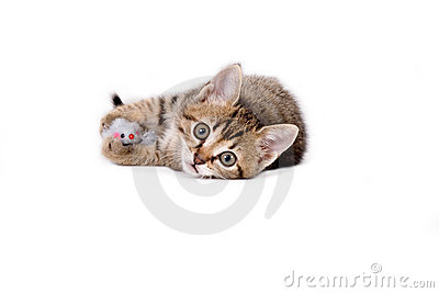 Striped kitten and a mouse toy