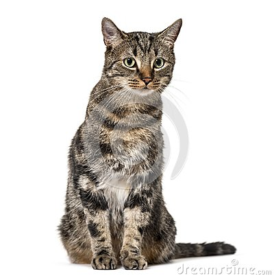 Free Striped Mixed-breed Cat Sitting, Isolated On White, (2 Years Old Royalty Free Stock Photos - 105771348