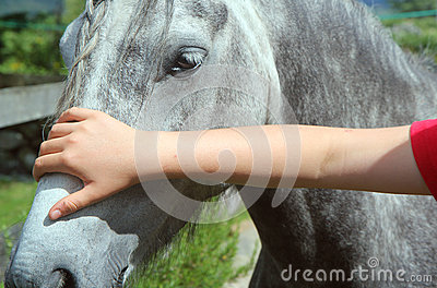Stroking a horses head closeup.