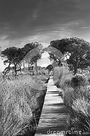 Strophylia wetlands