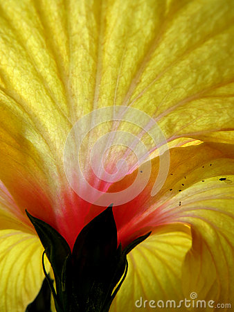 Structure de fleur