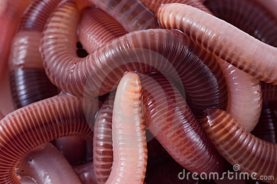Structure. Earthworms