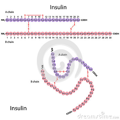 Structure of human insulin diagramed in two different ways, eps8.