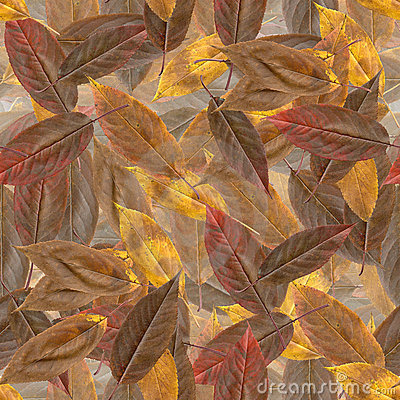 Structure seamless: autumn leaves