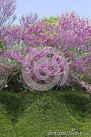 Struik met roze bloemen royalty vrije stock afbeelding afbeelding 13083456 - Bush architectuur ...