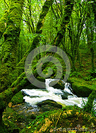 Strumień w zielonym lesie