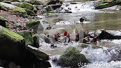 Strumień wspaniałych szybów słodkowodnych, przepływa rzeka Dziki górski rzek zbliżenie duży czysty strumień Strzał kamienia zdjęcie wideo