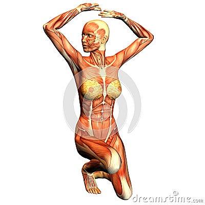 Struttura del muscolo di una donna sportiva