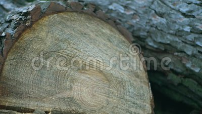 Struttura, taglio di un albero archivi video