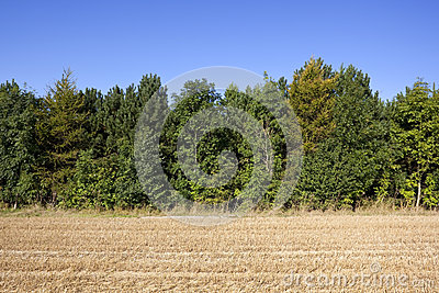 Stubble field and trees background