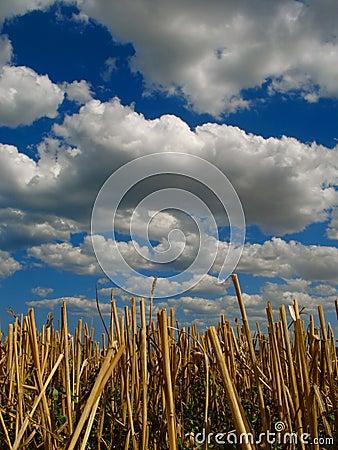 Stubble y nubes