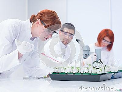 Students experimental studies