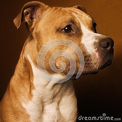 Free Studio Doggy Stock Photos - 414613