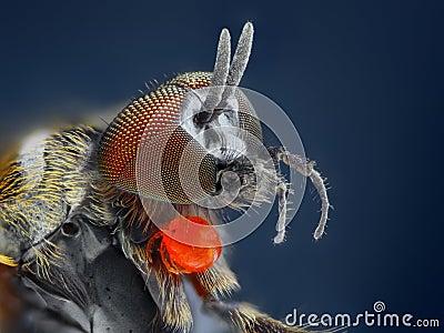 Studio marcato e dettagliato estremo della mosca del Simuliidae