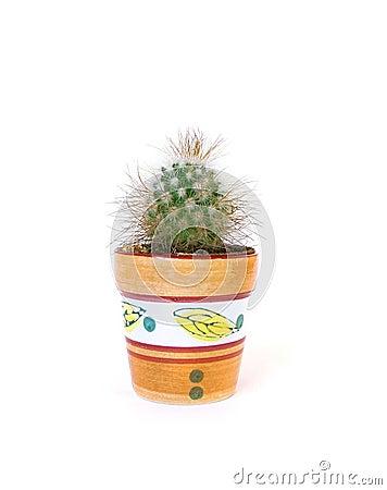 Studio shot cactus
