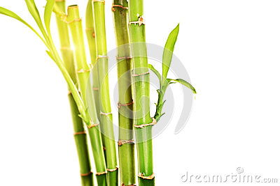 Studio shot of green stalks of bamboo with leaves