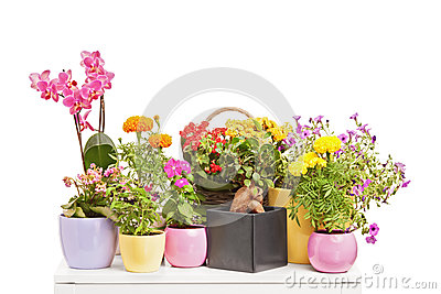 A studio shot of various types of flowers