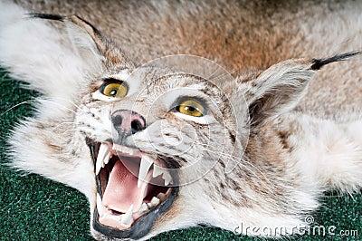 Stuffed lynx