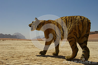 Stuffed Tiger in the Desert