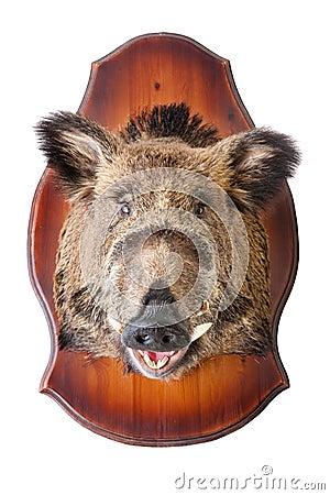 Stuffed wild boar head