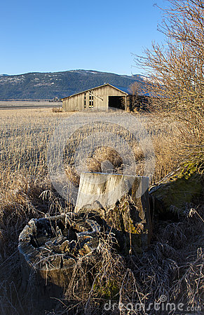 Stump and barn in field.
