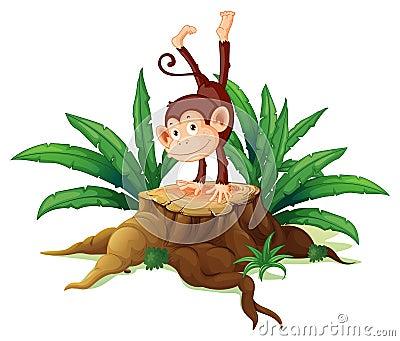 A stump with a playful monkey