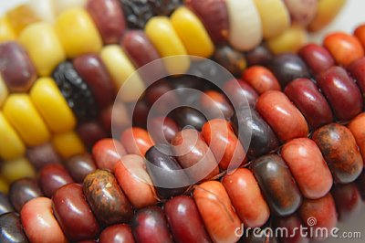 Indian Corn Closeups